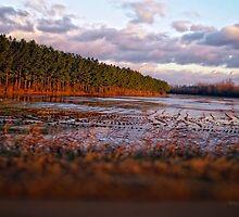 Field of Floods - Lonestar bottom, MS by Brett Wicker