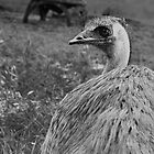 The Emu Smiled :) by streetraven