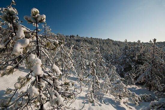 Winter Wonderland by Brendan Schoon