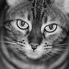 No more photos! by evilcat