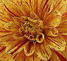 Speckled Dahlia by Monnie Ryan