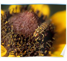 Fly on Black-eyed Susan Poster