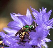 Bee on a Button by Bill Spengler