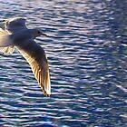 Flying across water (seagull) by MarkJeremy