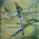 Little Blue Dragonfly by louisegreen