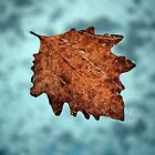 Dry leaf by portokalis