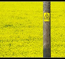 rapeseed field.  danger of death by markgorman