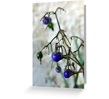 Blue Berries For Christmas Greeting Card