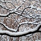 Abstract Branches I by HELUA