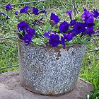 Graniteware Blossoms by © Betty E Duncan ~ Blue Mountain Blessings Photography