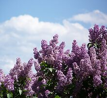 Lilac Clouds by © Betty E Duncan ~ Blue Mountain Blessings Photography