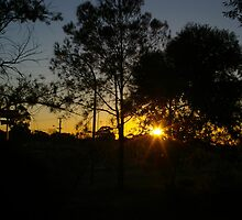 through the gum trees  by janfoster
