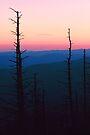 SUNSET,CLINGMANS DOME by Chuck Wickham