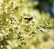 Bee1 by John Marx