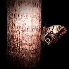 Moth by mark4321