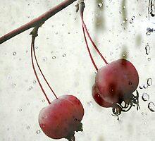 rosehip by Anne Seltmann