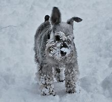 Playing in the snow by Paul Gibbons
