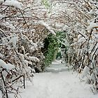 Snow way  by Debbie Ashe