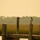 Pelicans at Sunset by Peter Van Egmond