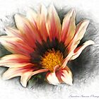 African Daisy by Sandra Bauser Digital Art