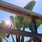 sunny day by beveralyJ