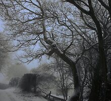 The Bewitched Tree by missmoneypenny