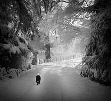 How cold before the dog wants home? by colin campbell