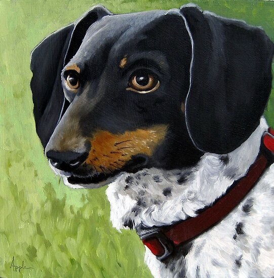 Simon - Dachshund dog portrait by LindaAppleArt