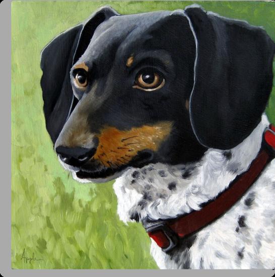 Simon - Dachshund dog portrait by LindaAppleArt
