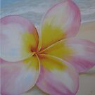 """Frangipani on beach"" Washed up by Taniakay"