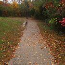 A Little Walkway in Fall by Virginia Shutters