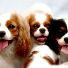Three Dogs With Tongues! by devinadewi