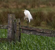 Fence sitter by Jason Ruth