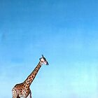 Giraffe on the Horizon... by Cherie Roe Dirksen