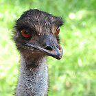 Emu Head Shot by streetraven