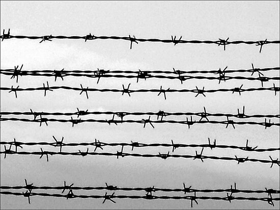 Barbed wire by AleFletcher