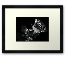 One Lovely  Rose. Framed Print