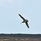 Curlew above the Moors by Trevor Kersley