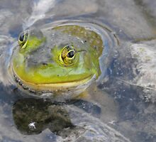 Ribbit!! by Tracy Faught
