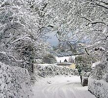Winter Canopy by missmoneypenny