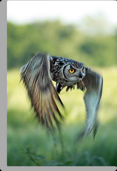 Eagle owl inflight by FraserJ