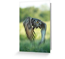 Eagle owl inflight Greeting Card