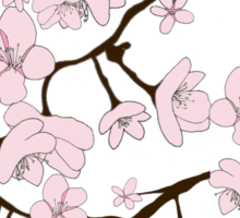 Sakura Blossoms Sticker