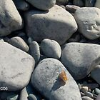 Butterfly on Rocks by mmcc0713