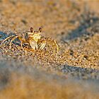 Sand Crab by Julian Fulton-Boote