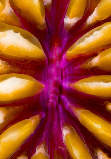 Coral Polyp by Carlos Villoch