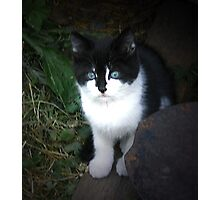 HAPPINESS IS A WARM KITTEN: Baby Jacki Photographic Print