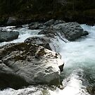 The North Fork of the NookSack by rferrisx