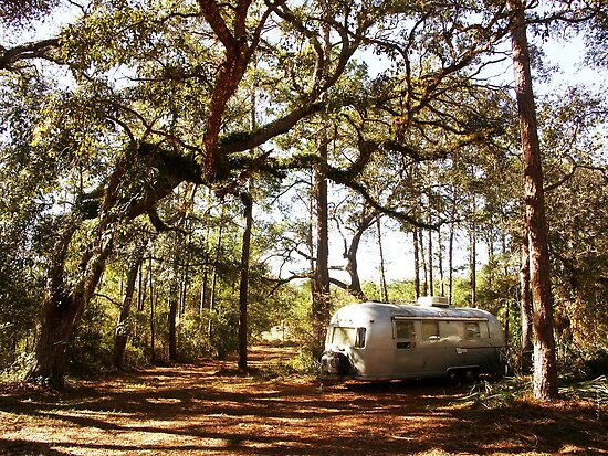Airstream Trailer in the Forest by TravlynWomyn