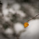 Hanging On. by eyeshoot